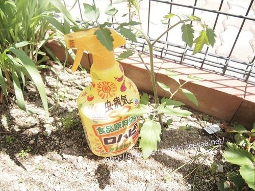 strawberryP5115511アースガーデン ロハピ.JPG